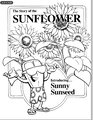 The Story of the Sunflower Coloring Book