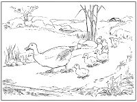 ducks and ducklings coloring page