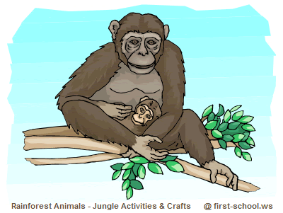 Rainforest Animals Preschool Activities and Crafts